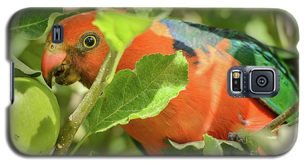 Galaxy S5 Case featuring the photograph  Parrot In Apple Tree by Werner Padarin