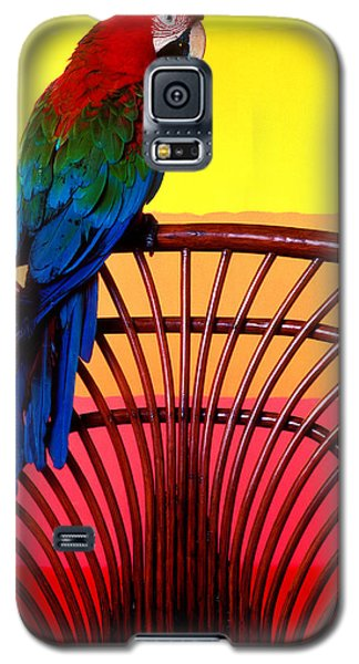 Parrot Sitting On Chair Galaxy S5 Case by Garry Gay