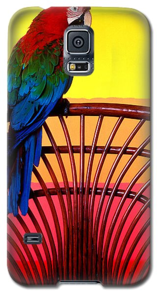 Macaw Galaxy S5 Case - Parrot Sitting On Chair by Garry Gay