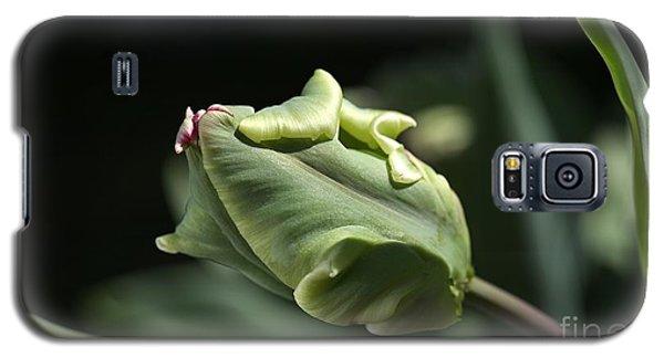 Parrot Tulip Bud Galaxy S5 Case