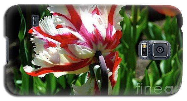 Parrot Tulip Galaxy S5 Case