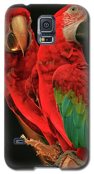 Galaxy S5 Case featuring the photograph Parrots by Jacqui Boonstra