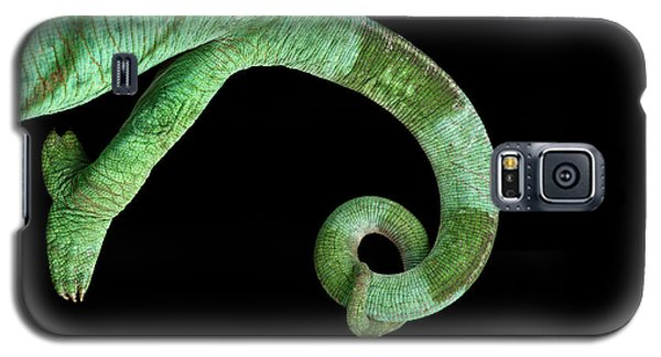 Parson Chameleon, Calumma Parsoni On Black Background, Top View Galaxy S5 Case by Sergey Taran