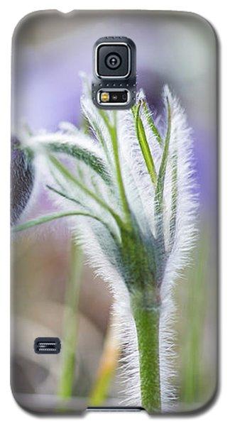 Pasque Flower's Silver Grey Hair Galaxy S5 Case
