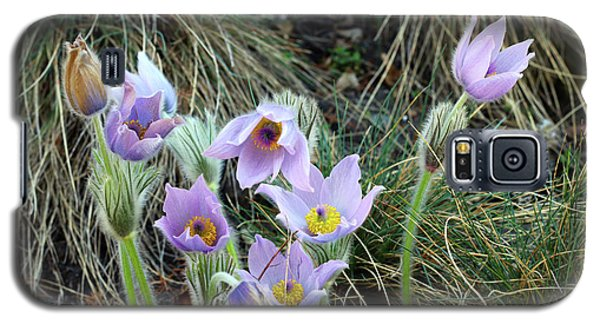 Galaxy S5 Case featuring the photograph Pasqueflower by Michal Boubin