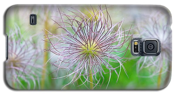 Galaxy S5 Case featuring the photograph  Pasqueflower Seed Heads by Tim Gainey