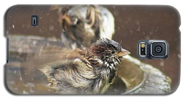 Pass The Towel Please: A House Sparrow Galaxy S5 Case by John Edwards