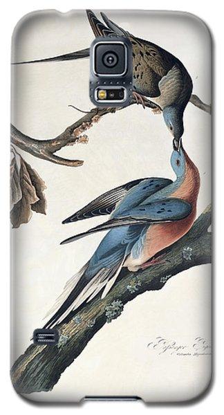 Audubon Galaxy S5 Case - Passenger Pigeon by John James Audubon
