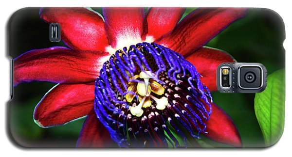 Galaxy S5 Case featuring the photograph Passion Flower by Anthony Jones