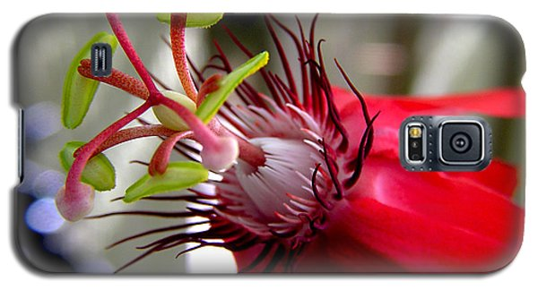 Passion Flower In Red Galaxy S5 Case