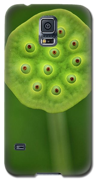 Past Prime Galaxy S5 Case