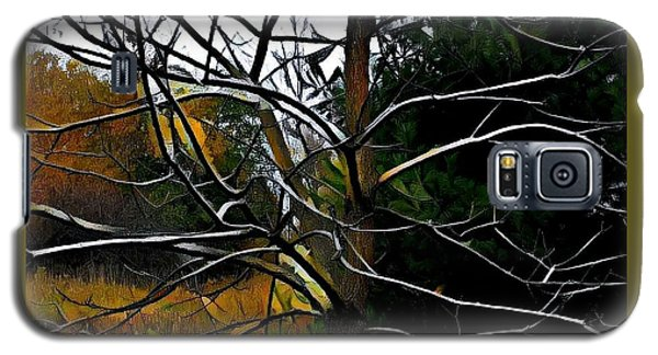 Past The Branches Galaxy S5 Case by Diane Miller