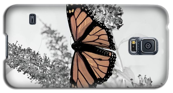 Pastel Monarch On Black And White Galaxy S5 Case