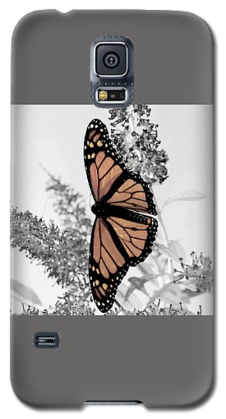 Galaxy S5 Case featuring the photograph Pastel Monarch On Black And White by Lara Ellis