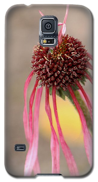 Galaxy S5 Case featuring the photograph Pastel Perfection by Deborah  Crew-Johnson