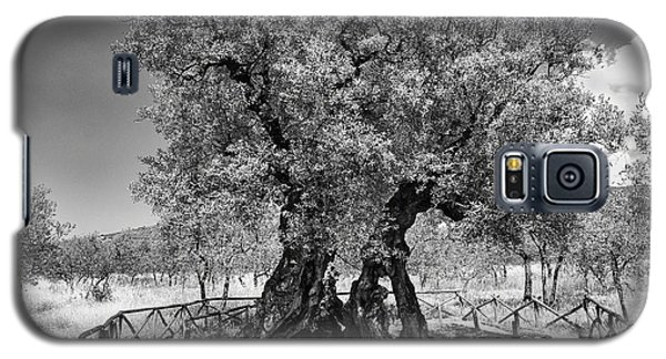 Patriarch Olive Tree Galaxy S5 Case