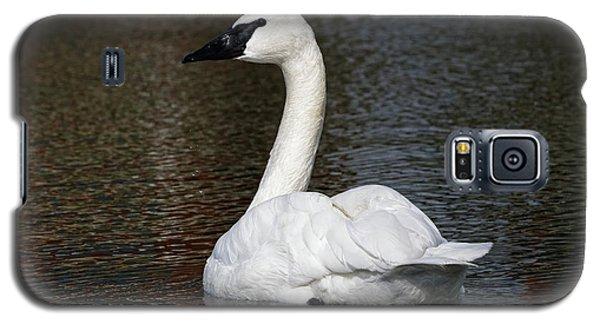 Peaceful Swan Galaxy S5 Case