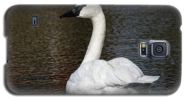 Peaceful Swan Galaxy S5 Case