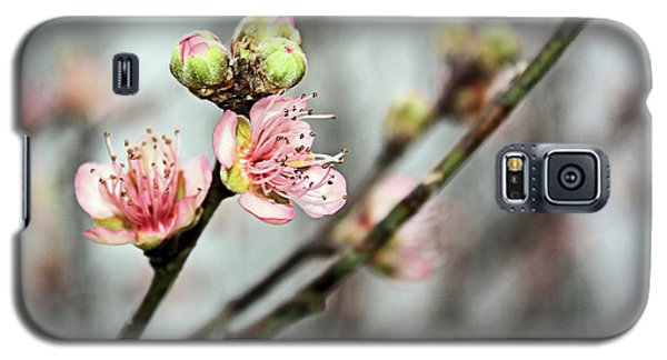 Galaxy S5 Case featuring the photograph Peach Blossom by Kristin Elmquist