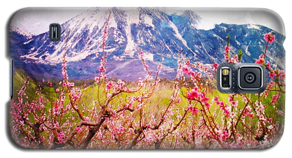 Peach Blossoms And Mount Lamborn II Galaxy S5 Case by Anastasia Savage Ealy