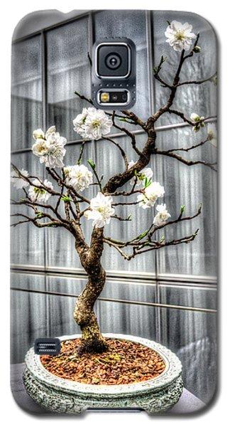 Peach Bonsai Tree Galaxy S5 Case by Wade Brooks
