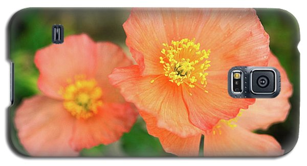 Galaxy S5 Case featuring the photograph Peach Poppies by Sally Weigand
