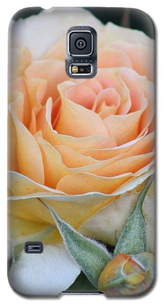 Peach Rose 2 Galaxy S5 Case