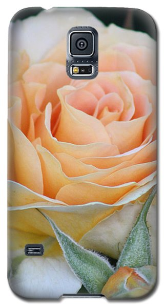 Peach Rose 2 Galaxy S5 Case
