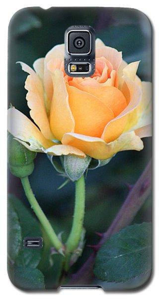 Peach Rose 3 Galaxy S5 Case