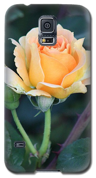 Peach Rose 3 Galaxy S5 Case