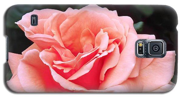 Peach Rose Galaxy S5 Case by Rona Black