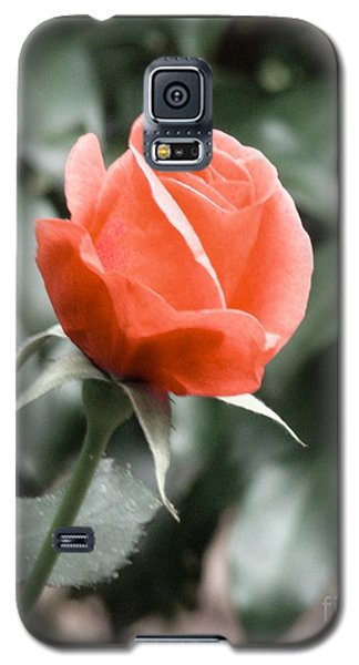 Peachy Rose Galaxy S5 Case