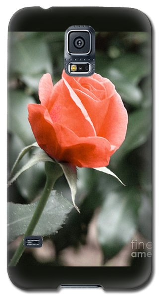 Galaxy S5 Case featuring the photograph Peachy Rose by Rand Herron