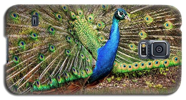 Peacock In Beacon Hill Park Galaxy S5 Case