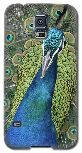 Galaxy S5 Case featuring the photograph Peacock by Matthew Bamberg