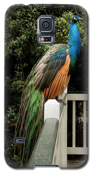 Galaxy S5 Case featuring the photograph Peacock On A Fence by Jean Noren