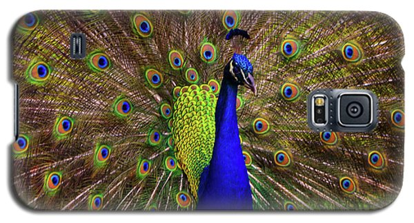 Peacock Showing Breeding Plumage In Jupiter, Florida Galaxy S5 Case by Justin Kelefas