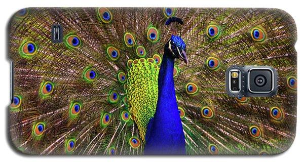 Peacock Showing Breeding Plumage In Jupiter, Florida Galaxy S5 Case by Justin Kelefas