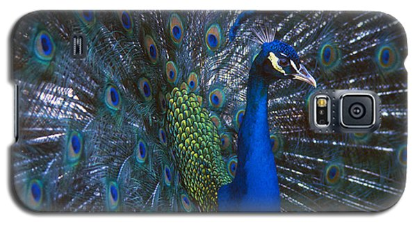 Galaxy S5 Case featuring the photograph Peacock Splendor by Marie Hicks