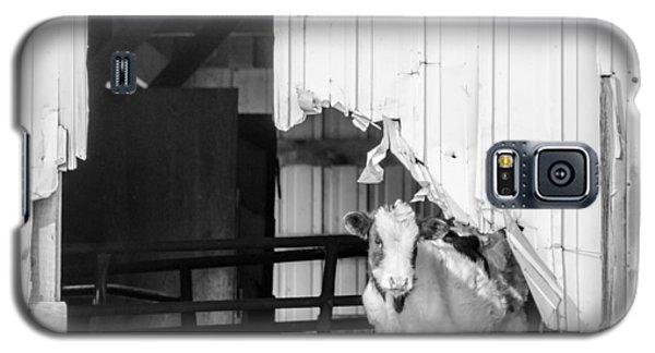 Peak-a-boo Calf Galaxy S5 Case by Dan Traun