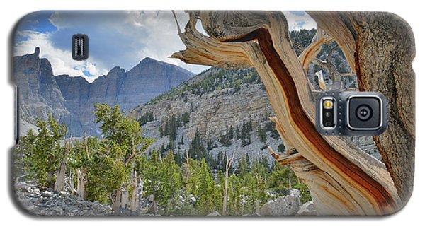 Peak Bristlecone Pine Galaxy S5 Case