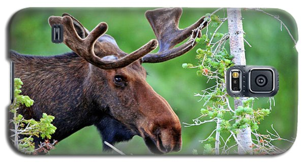 Galaxy S5 Case featuring the photograph Peaking Moose by Scott Mahon