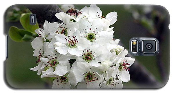 Pear Blossoms In Spring Galaxy S5 Case by Sheila Brown