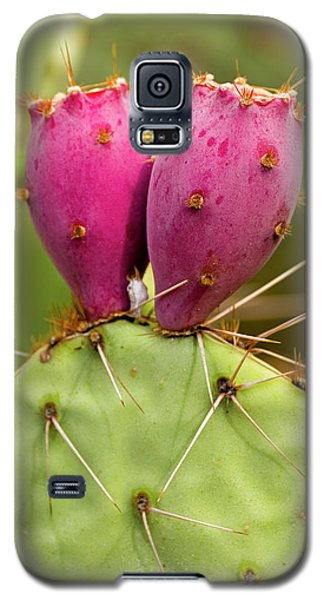 Galaxy S5 Case featuring the photograph Pear O Fruit V07 by Mark Myhaver