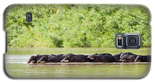 Peccaries Crossing River Galaxy S5 Case