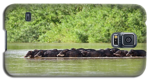 Peccaries Herd Crossing River Galaxy S5 Case