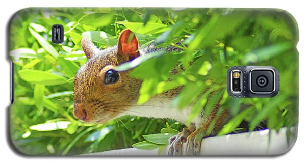 Peek-a-boo Gray Squirrel Galaxy S5 Case