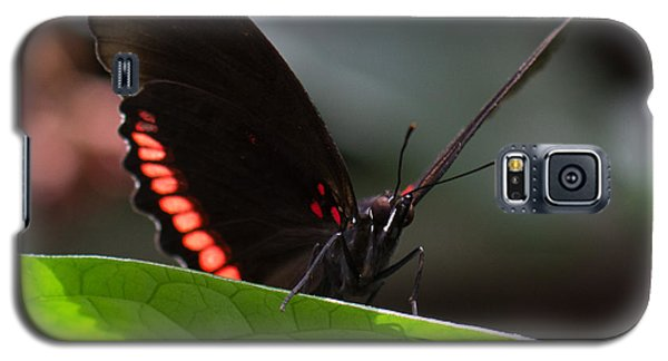 Peek-a-boo 8x10 Galaxy S5 Case