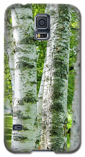 Galaxy S5 Case featuring the photograph Peek A Boo Birch by Greg Fortier