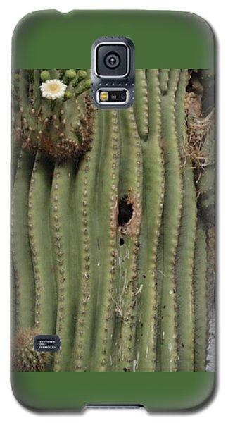 Peek-a-boo Cactus Wren Galaxy S5 Case